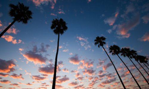 palm trees3